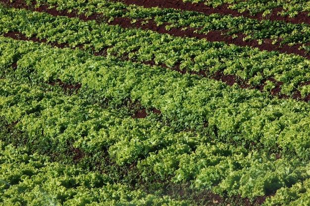 채소밭에서 성장하는 다양한 채소 식물