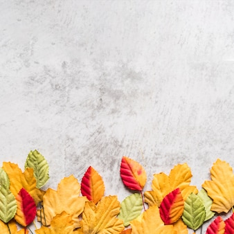 Various autumn leaves on white table
