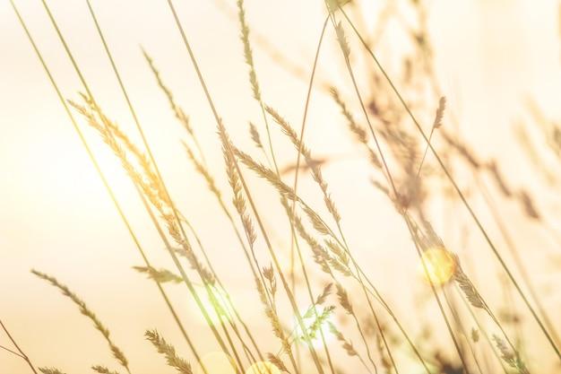 夕日の光線、選択的な焦点、ぼやけた背景、太陽のフレアの雪の層の下のさまざまな草の葉