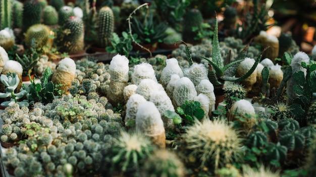 温室で育つ様々なサボテンの植物
