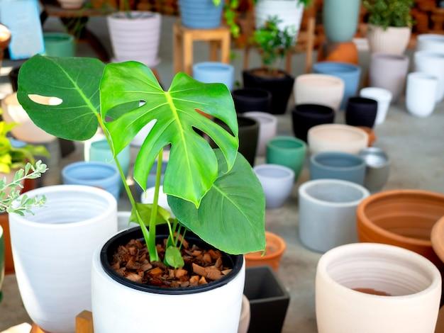 콘크리트 바닥에 녹색 잎을 가진 다양한 다채로운 세라믹 식물 냄비. 기하학적 세라믹 화분.