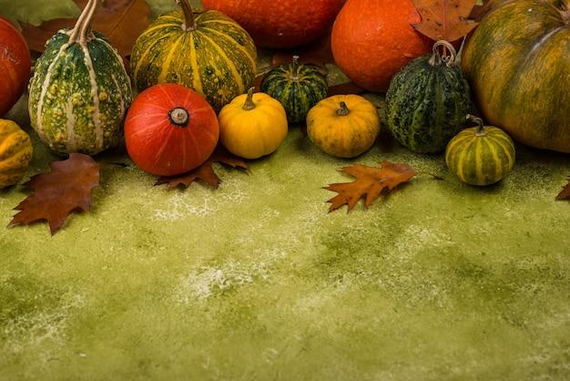 Различные декоративные тыквы на зеленой поверхности