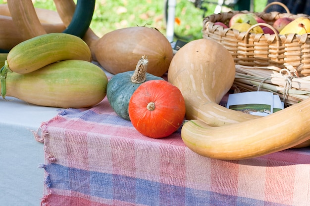 Various different pumpkins