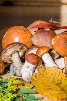 森の中で秋に集められた様々な食用キノコ