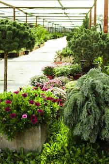 조경용 다양한 상록 식물과 꽃
