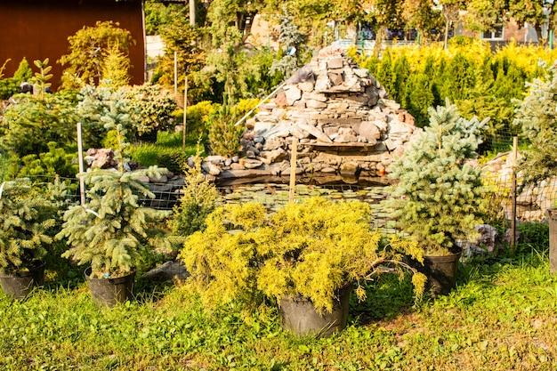 조경 및 암석에 대한 다양한 상록 식물