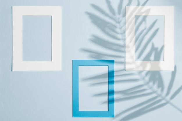 Various frames hanging on a wall and leaves shadows