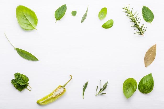 Различные свежие травы для приготовления ингредиентов перечная мята