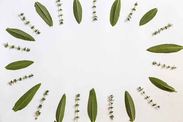 Various fresh herbs from the garden rosemary, sage ,and thyme  leaves flat lay with central  copyspace on white background