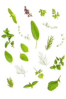 Various fresh herbs  isolate on white background.