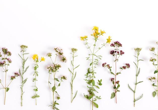さまざまなハーブや花のノコギリソウ、マジョラム、白い背景のツッサン、上面図、フラットレイ、花のボーダー