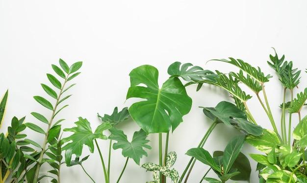 다양한 집 식물 아름다운 녹색 잎 자연 공기 정화 monstera philodendron selloum zamioculcas zamifolia 뱀 식물 흰색 표면에 딱정벌레 발견