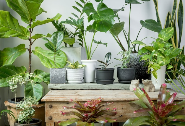 Various house plants  green leaves natural air purify with monsteraphilodendron selloum aroid palmzamioculcas zamifoliaficus lyratasnake plantbromeliadspotted betle on wood table