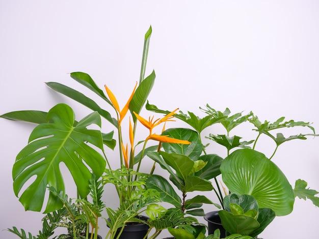 흰색 방에 있는 현대적인 세련된 용기에 담긴 다양한 집 식물, 자연 공기 정화
