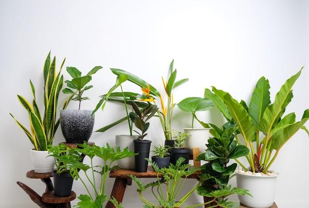 흰색 방에 있는 나무 벤치에 있는 현대적인 세련된 컨테이너에 있는 다양한 집 식물