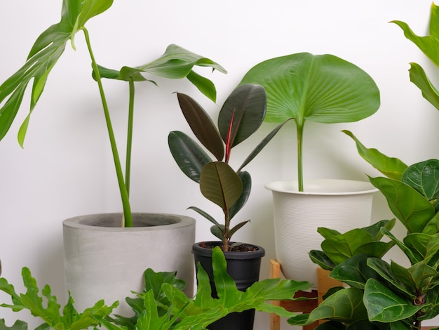 다양한 집 식물은 흰색에 고무 나무몬스테라, 필로덴드론, 자미오쿨카스 자미폴리아를 남긴다