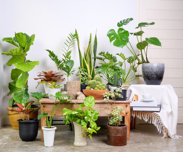 Various house plants in modern stylish container on cement floor in white room,natural air purify with monstera,philodendron selloum, aroid palm,zamioculcas zamifolia,ficus lyrata,snake plant