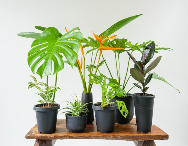 Various house plants in modern stylish container on wooden bench in white room