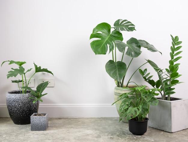 Различные комнатные растения очищают естественный воздух на цементном полу в комнате