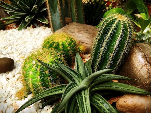 정원에서 흰 자갈과 바위 근처의 다양한 종류의 사막 식물