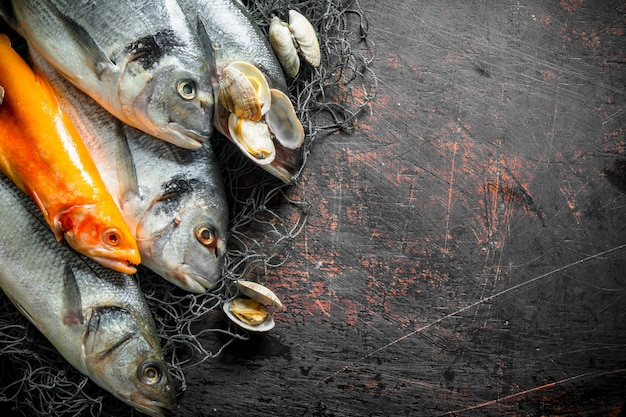 Various raw fish on fishing net with oysters. on dark rustic