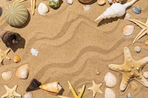센터 여름 배경 복사 공간이 맑은 날에 모래에 다양한 조개와 별