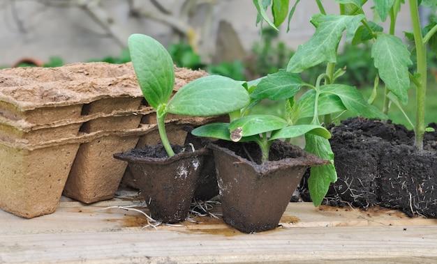 Various seedlings for planting