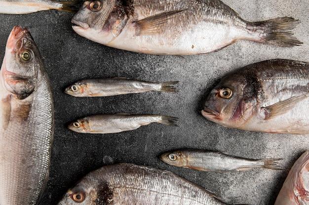 Various silver seafood fish flat lay