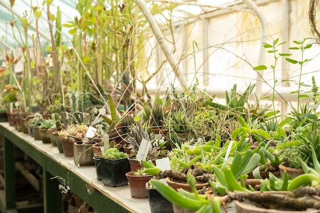 가정용 식물 묘목의 온실 판매에서 점토 및 플라스틱 냄비의 다양한 다육 식물