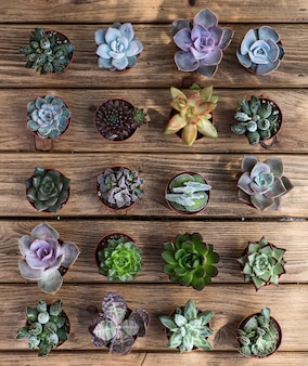 Various succulents on the wooden board as a background. top view.