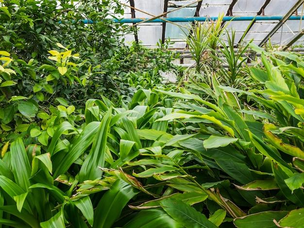 다양한 열대 식물. 온실 조건에서 나무와 야자수가 자랍니다. 프리미엄 사진