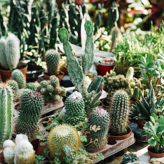 Various types of fresh cactus plants