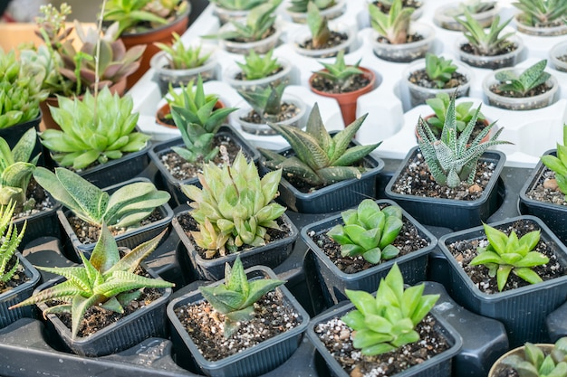 Various types of succulent cactus pot plants
