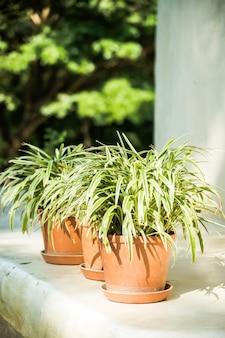 屋外パティオの花瓶植物