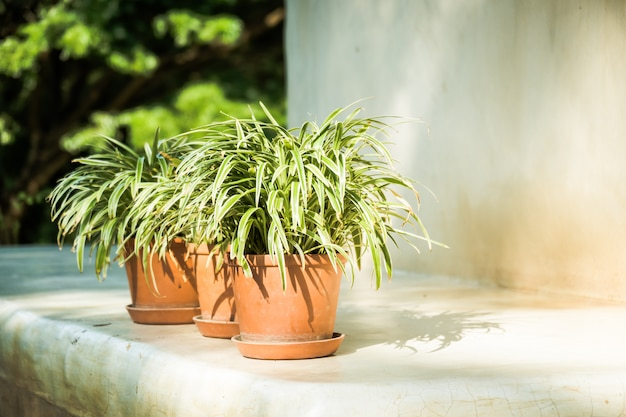 Vase plant with outdoor patio