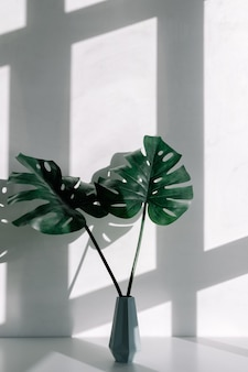 창에서 그림자와 함께 흰색 테이블에 monstera 식물의 장식 잎 꽃병.