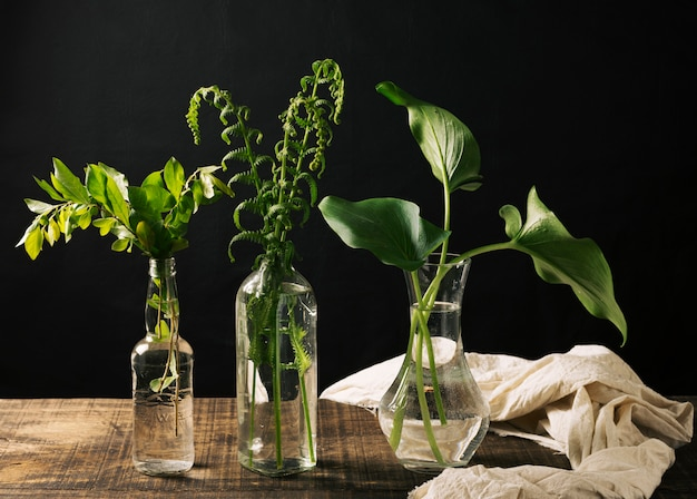 Vases with green plants
