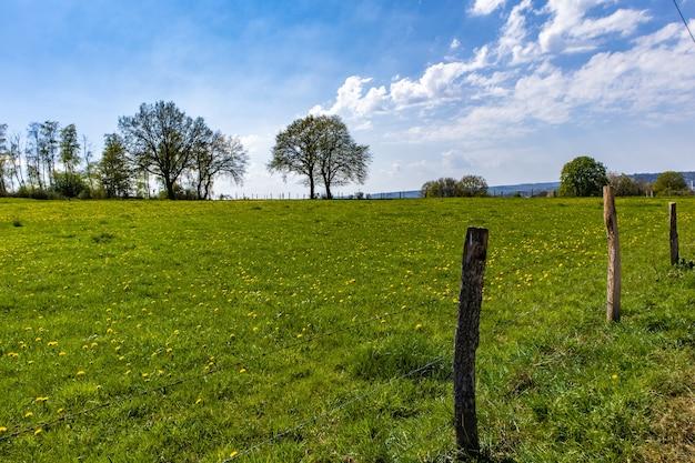 Обширная зеленая лужайка в парке с несколькими деревьями и голубым небом