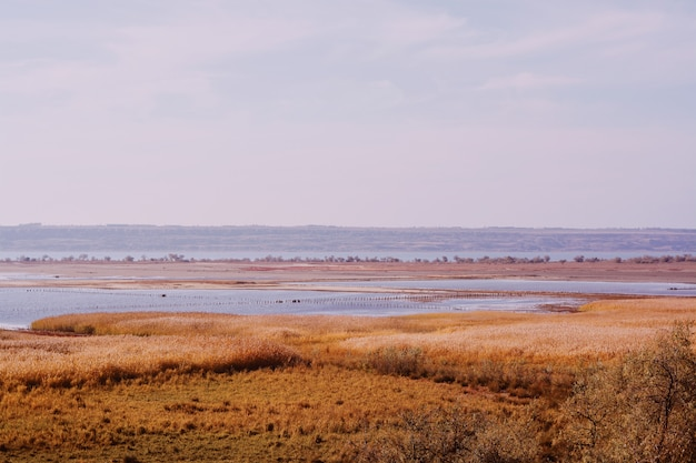 冬の海で乾いた草で覆われた広大な土地
