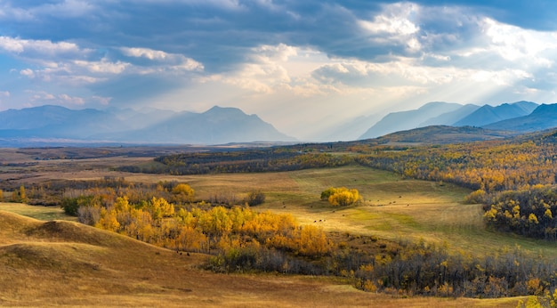 Vast prairie and forest in beautiful autumn. sunlight passing blue sky and clouds on mountains. waterton scenic spot, waterton lakes national park, alberta, canada.