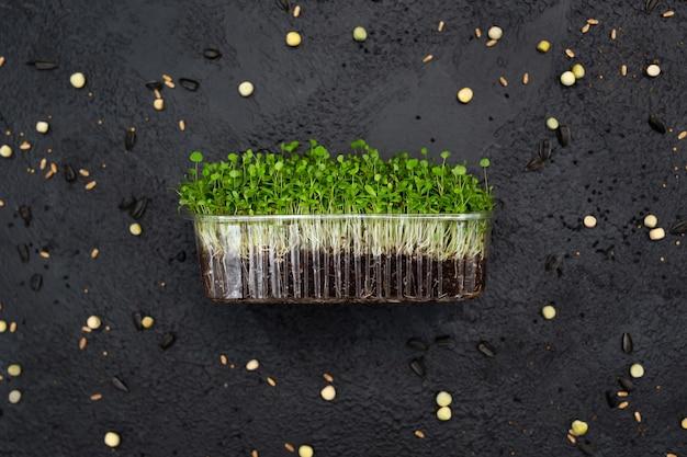 野菜のアルファルファもやし、マイクロ、マイクロジーン