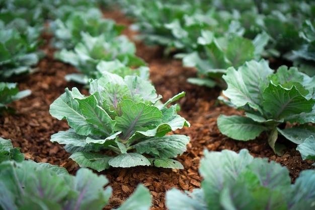 Vegetable garden color green texture