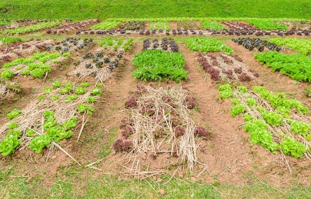 Vegetable garden herbs, and vegetables in backyard formal garden
