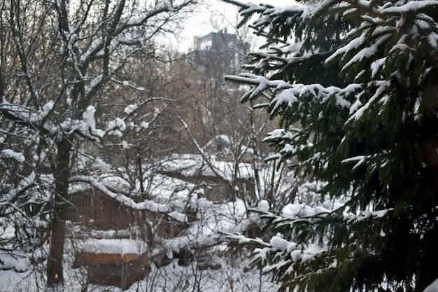 雪の中の家の近くの野菜畑