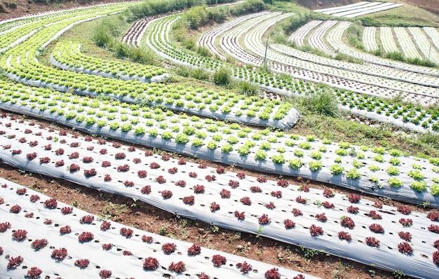 Огород, с пластиковой пленкой, защищенной на земле, пластиковой пленкой используется изоляция для овощей и предотвращает эрозию почвы. Premium Фотографии