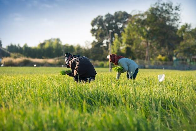 У огородников без химикатов для предотвращения вредителей, удобрений, ухода.