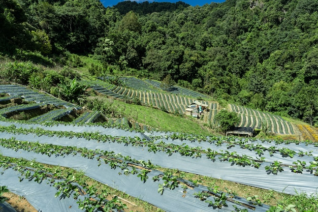 Vegetable plantations in the middle of the forest