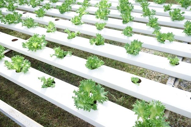 水力発電所に植えられた野菜サラダ
