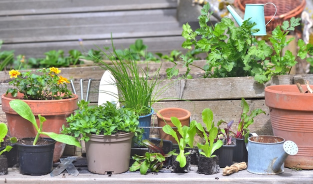 Vegetable seedlings and aromatic plant with gardening equipment on a plank in a little garden