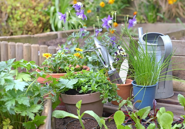 Vegetable seedlings and aromatic plants with gardening equipment